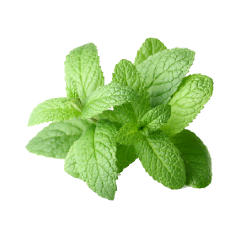 Best health benefits of peppermint herb Best health benefits of peppermint herb new pics